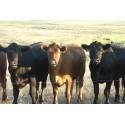 Πακέτο ηλεκτρικής περίφραξης 5στρ. για αγελάδες