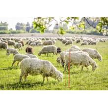 Δίχτυ για Αιγοπρόβατα