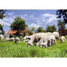 Δίχτυ Ηλεκτρικής Περίφραξης για Πρόβατα